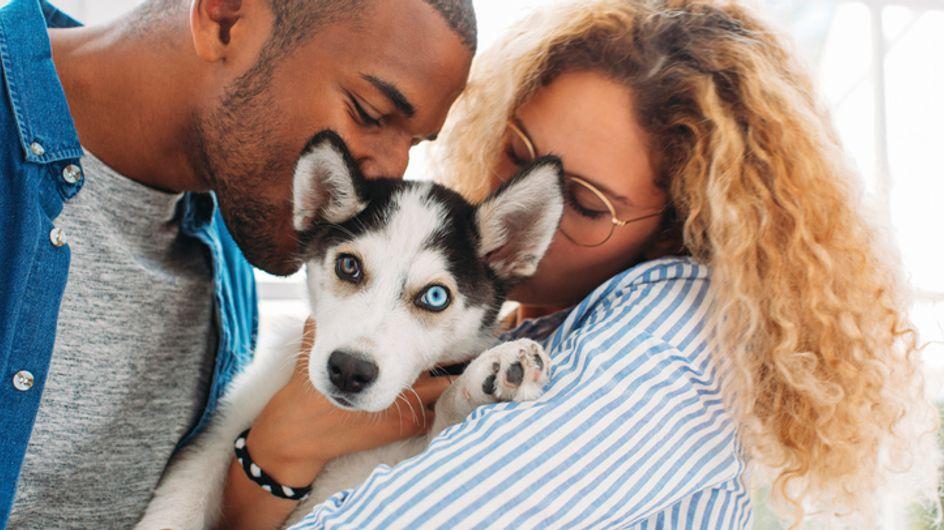 D'après une étude, 52% des propriétaires de chiens l'embrasseraient plus que leur partenaire