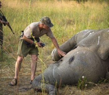 Dans l'Eure, un vétérinaire harcelé après la publication de ses photos de chasse