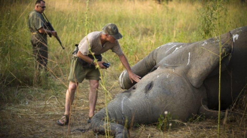 Dans l'Eure, un vétérinaire harcelé après la publication de ses photos de chasse en Afrique