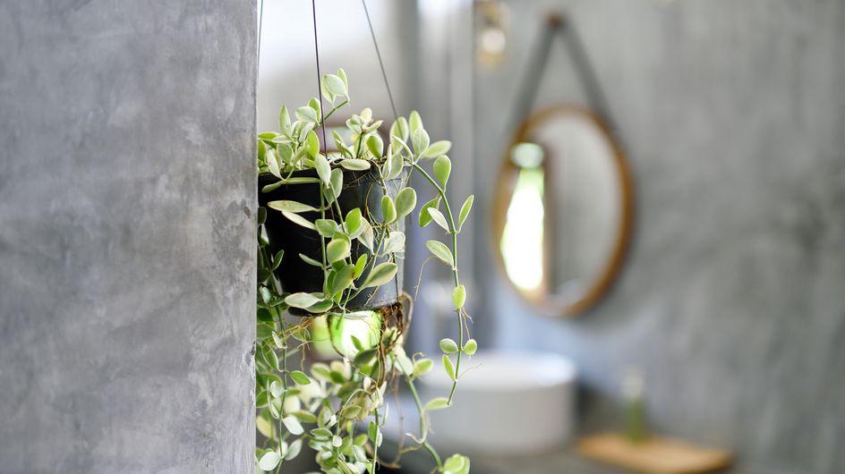 10 plantas para el baño que crecen (casi) solas