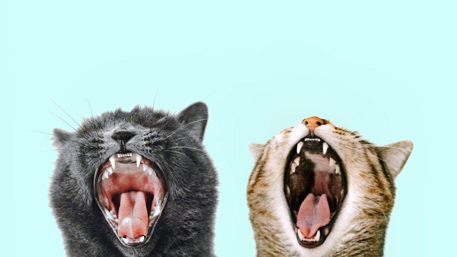 Katzen zusammenführen: So bleiben eure Vierbeiner entspannt