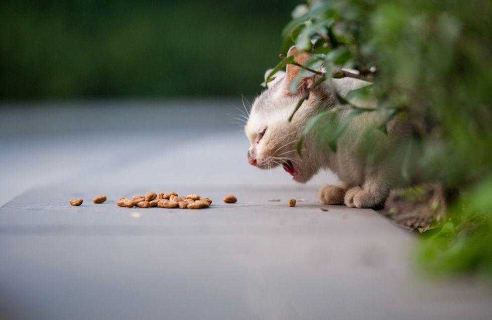 Une femme de 79 ans condamnée pour avoir nourri des chats errants