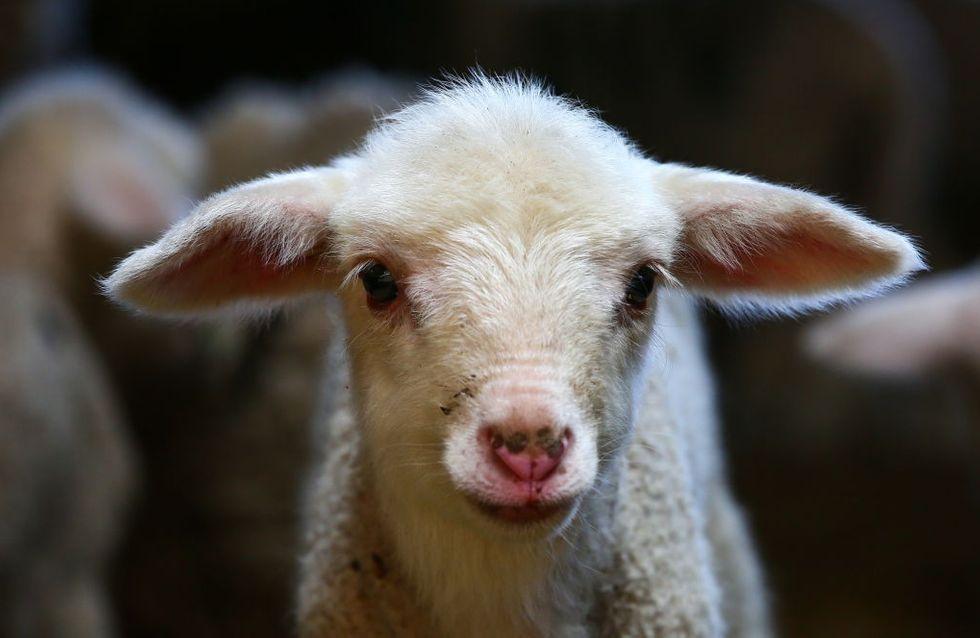 Les animaux d'une ferme pédagogique battus à mort dans l'Aube