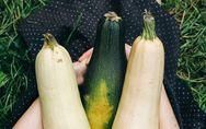 Achtung, Vergiftungsgefahr! Zucchini können lebensgefährlich sein
