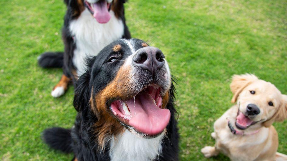 Des chiens qui devaient être mangés en Chine vont être adoptés en France