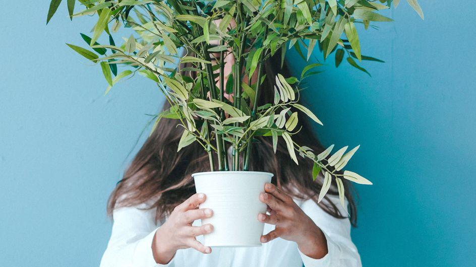Pflanzen bewässern im Urlaub: So überleben sie OHNE Gießen
