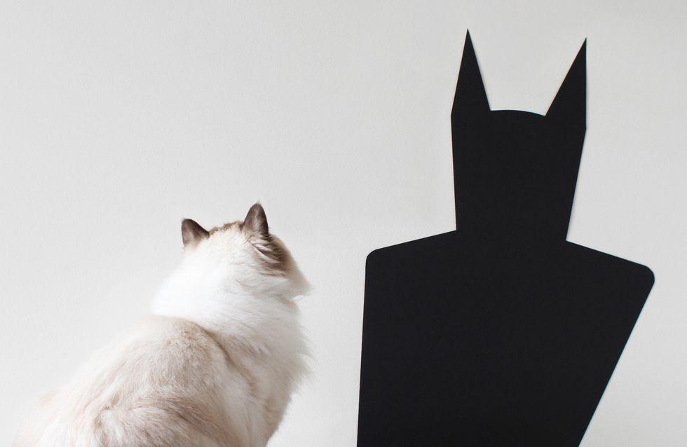 Studie: DAS ist der Grund, warum sich deine Katze schlecht benimmt