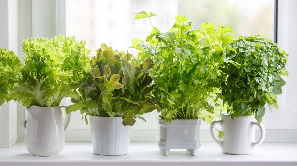 6 herbes à avoir dans sa cuisine