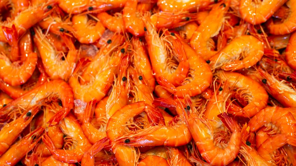 L'essentiel sur les crevettes et gambas