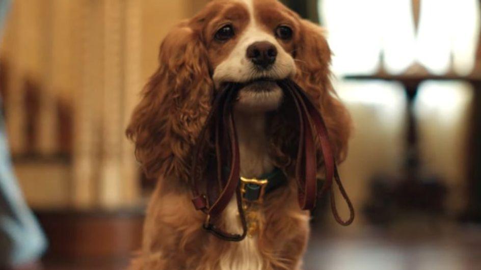La Belle et le Clochard : pour son live-action, Disney engage un chien abandonné