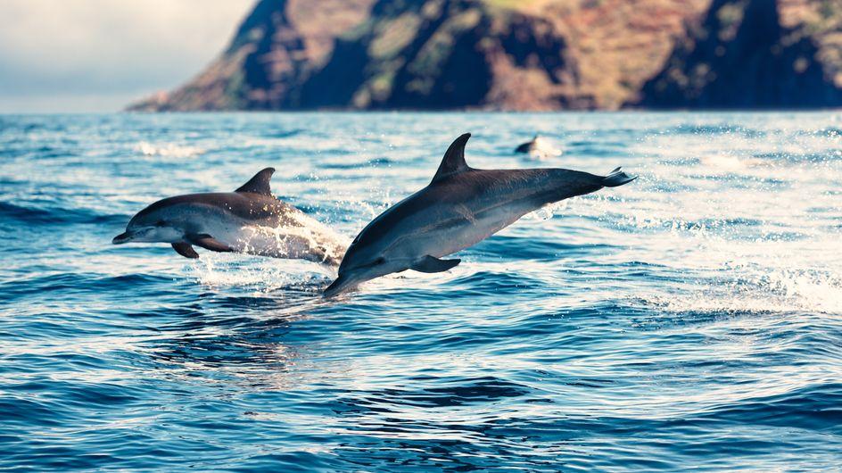 En Nouvelle-Zélande, il est désormais interdit de nager avec les dauphins