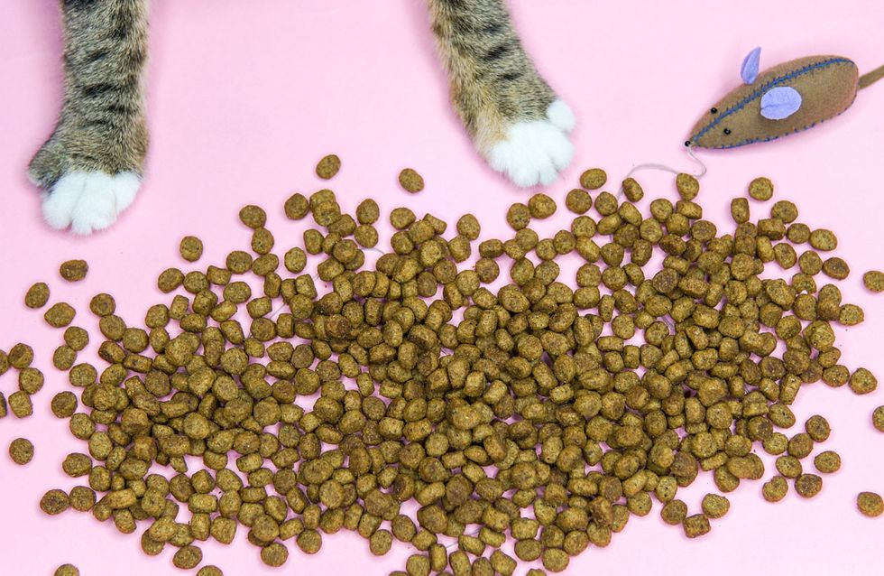 Katzen-Trockenfutter: Wie gesund ist es wirklich?
