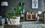 8 plantes d'intérieur qui n'ont pas besoin de lumière pour s'épanouir