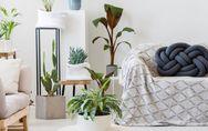 Pflanzen dekorieren: So setzt ihr euer Grün in Szene