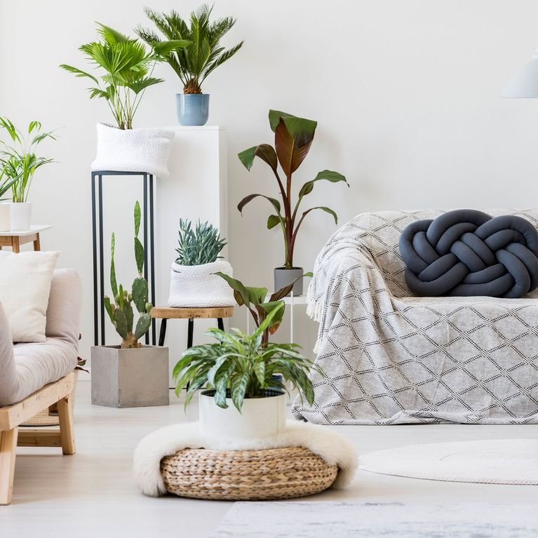 Pflanzen Dekorieren So Setzt Ihr Euer Grun Perfekt In Szene