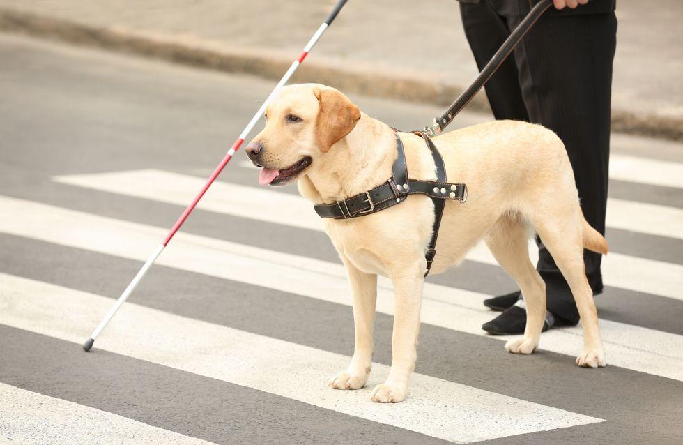 Un restaurateur refuse à un non-voyant et sa chienne guide l'accès à sa brasserie