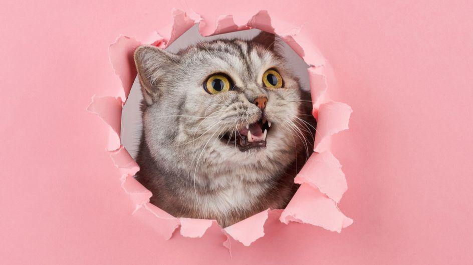 8 Probleme, die jeder Katzenbesitzer kennt und wie ihr sie löst