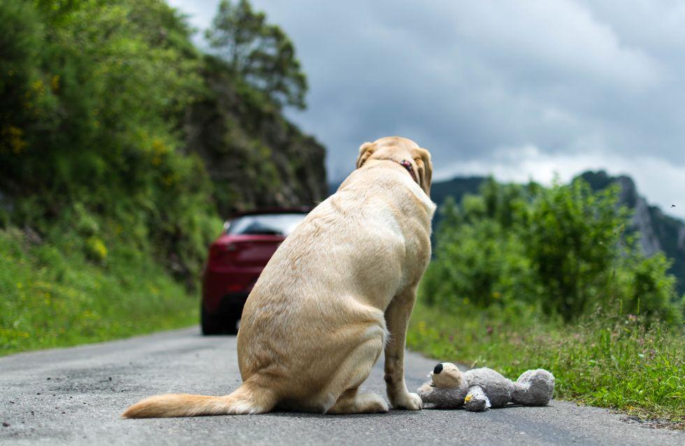 Le gouvernement veut punir ceux qui abandonnent leurs animaux de compagnie