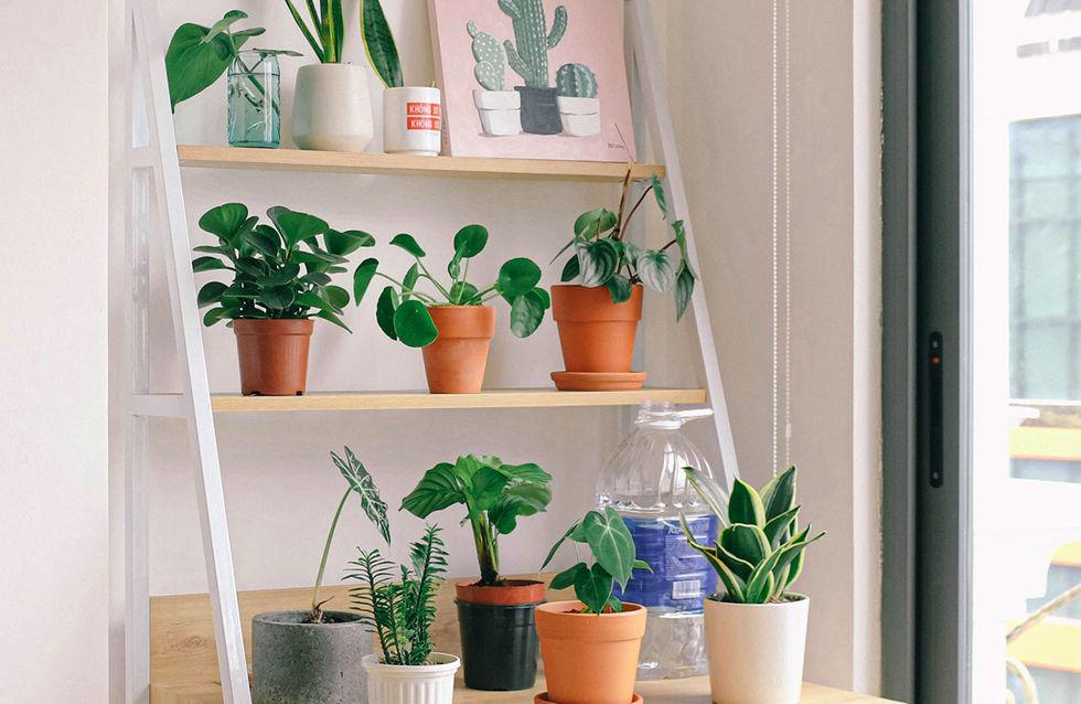 Pflanzen überwintern: So überstehen sie die kalte Jahreszeit