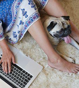 5 trucchi per avere casa sempre pulita se hai un animale domestico