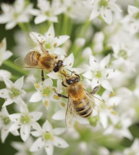 Cosméticos con veneno de abeja, ¿cómo funcionan?