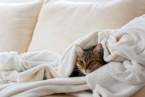 Katzenschnupfen Symptome Dauer Und Was Hilft