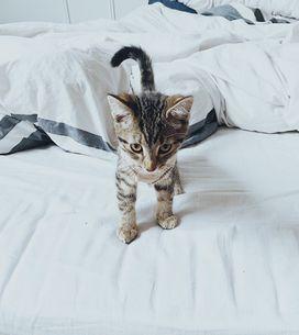 ¿Qué significa soñar con gatos bebés?