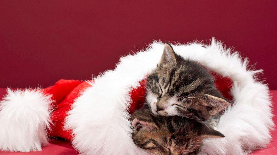 Meowy Christmas: Die besten Katzen-Adventskalender 2019