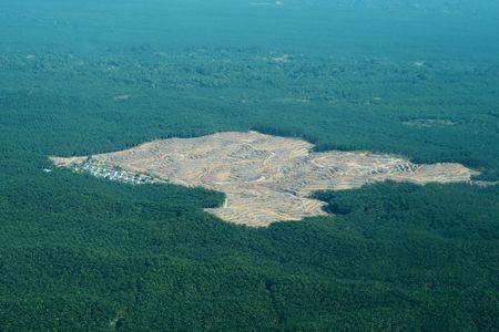 La déforestation et l'agriculture intensive de la culture des palmiers
