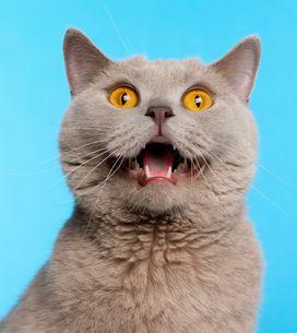 Katzenurin entfernen: Die besten Hausmittel gegen Geruch