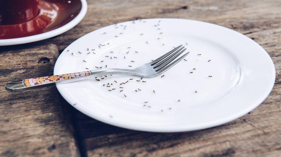 Come eliminare le formiche: i rimedi naturali più efficaci per liberarsene!