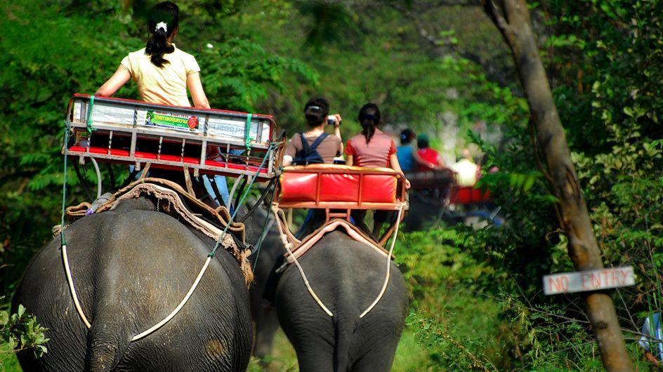 Le Cambodge va enfin interdire les balades à dos d'éléphants