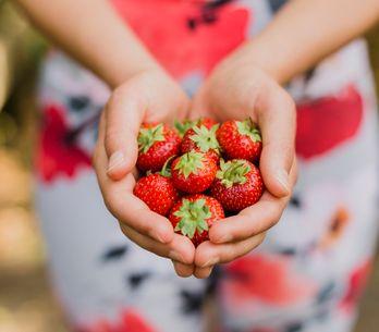Propiedades de las fresas: 10 beneficios que no conocías
