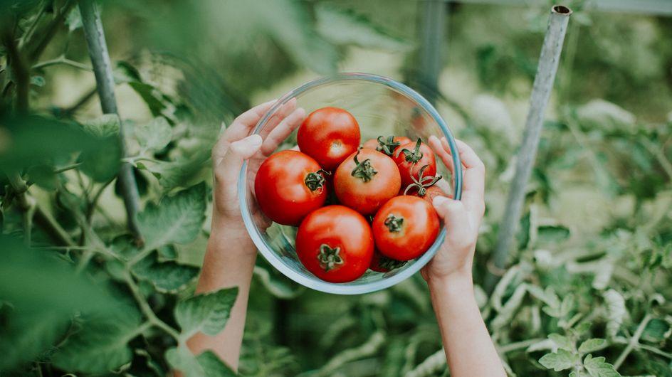 El tomate, un gran desconocido: estas son todas sus propiedades