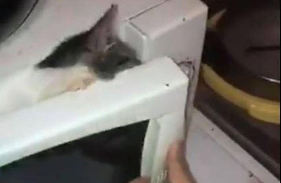 La SPA de Dunkerque porte plainte après le supplice d'un chaton passé au micro-ondes