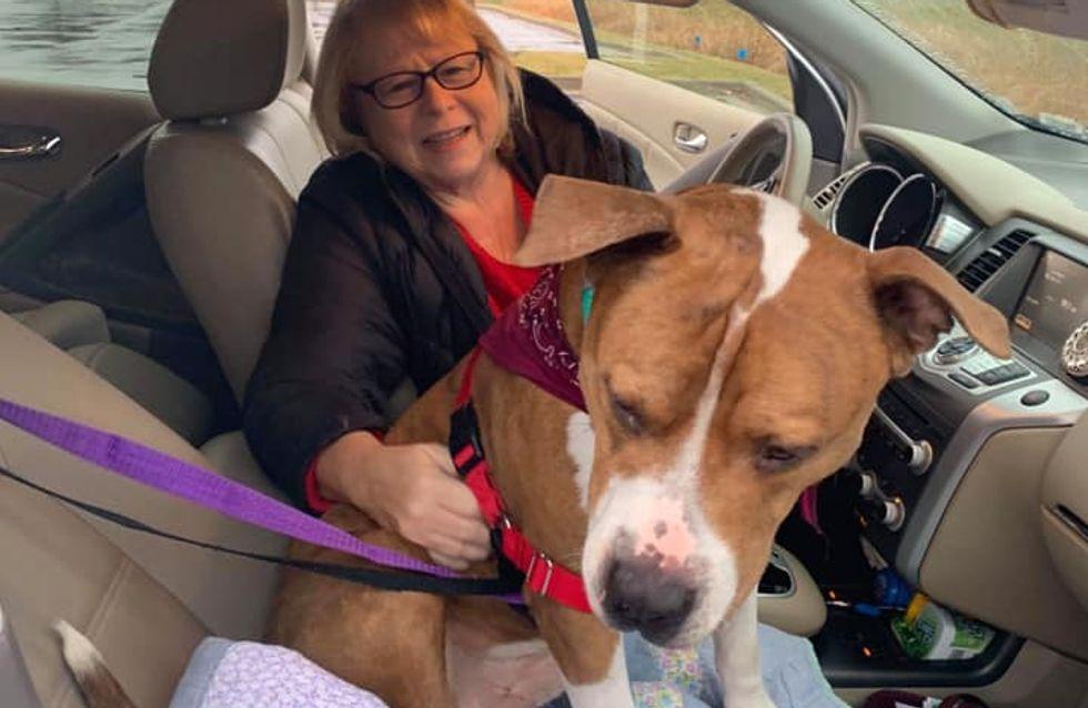 Des inconnus se relaient sur 3 000 km pour ramener un chien volé à sa propriétaire