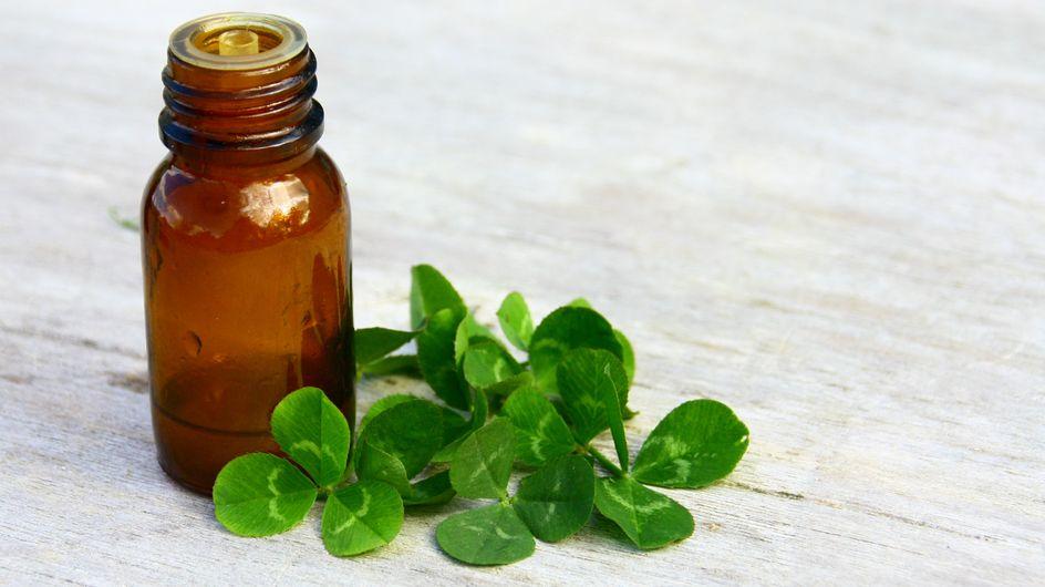 La gemmothérapie, une méthode thérapeutique qui soigne grâce aux bourgeons
