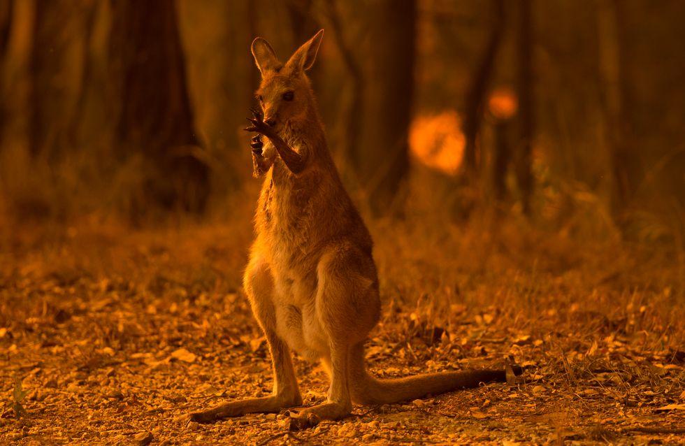 En Australie, cette famille a sauvé plus de 90 000 animaux des flammes