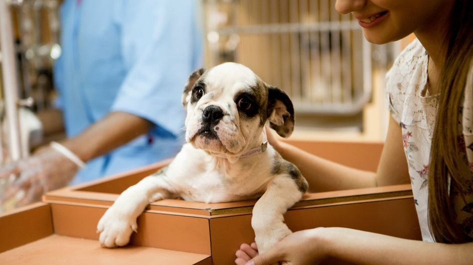Un nombre d'adoptions d'animaux record à la SPA en 2019
