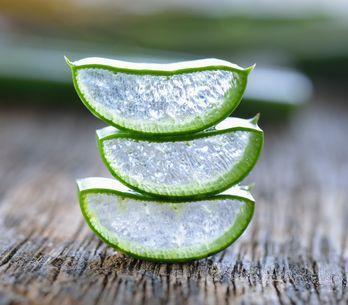 Aloe vera: benefici e caratteristiche di una vera alleata del tuo benessere