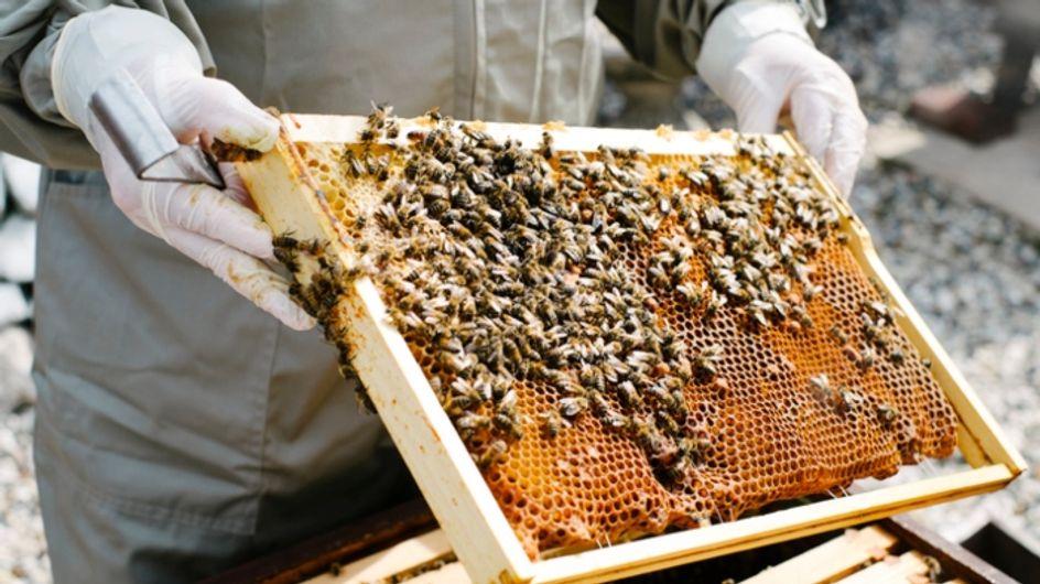 30 000 abeilles retrouvées mortes suite à un acte de vandalisme à Vanves