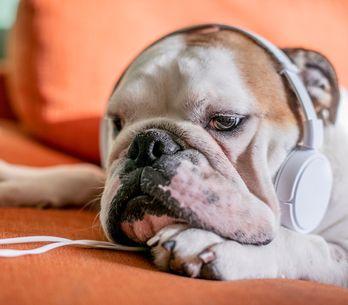 Arriva la Pet Playlist per ascoltare musica con i nostri amici animali