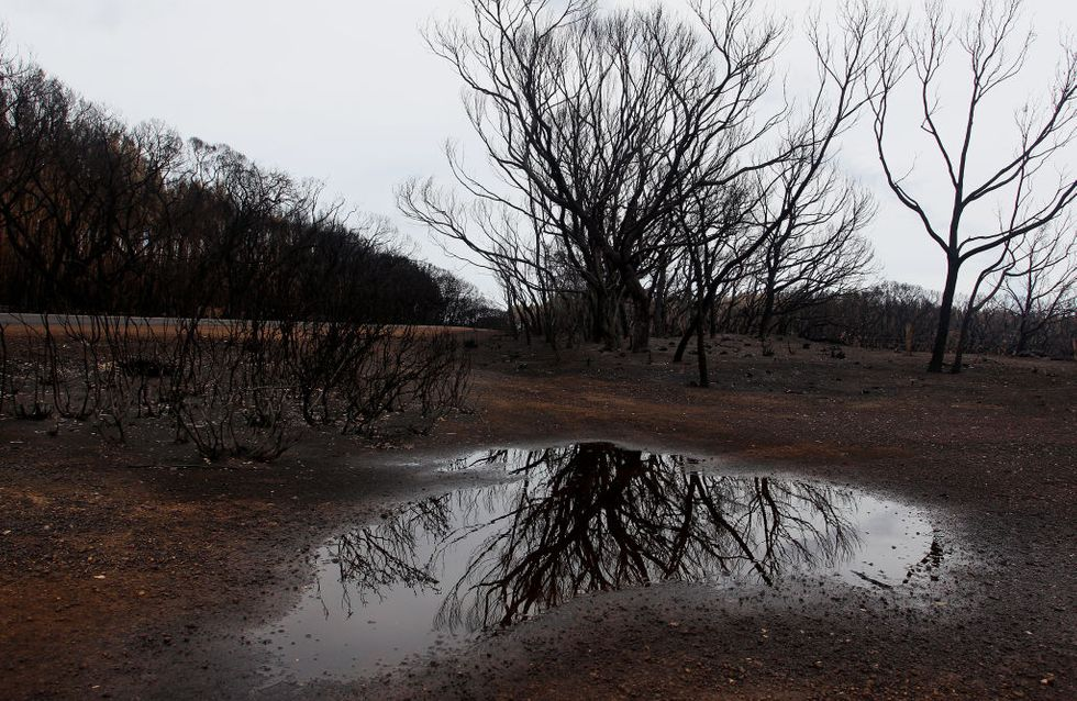 Australie : Des orages éteignent les feux à l'Est mais rien n'est encore gagné