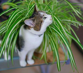 Ces 10 plantes toxiques pour votre chat à absolument connaître