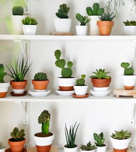 Pflegeleichte Zimmerpflanzen: Die überleben garantiert!