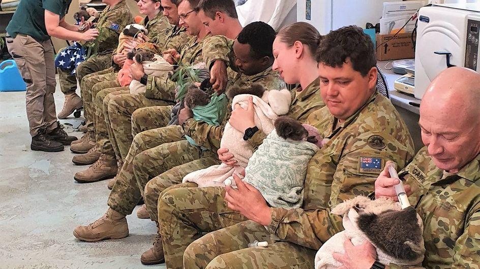 Des soldats nourrissent des koalas victimes de l'incendie dans un parc en Australie