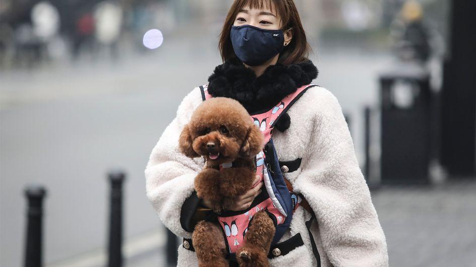 La Chine demande-t-elle à ses habitants de se débarrasser de leurs animaux ?