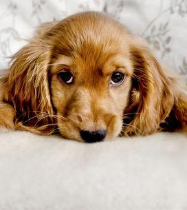 Sognare cani: significato e possibili interpretazioni