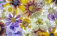 Blätter & Blumen pressen: 4 Methoden mit Erfolgsgarantie