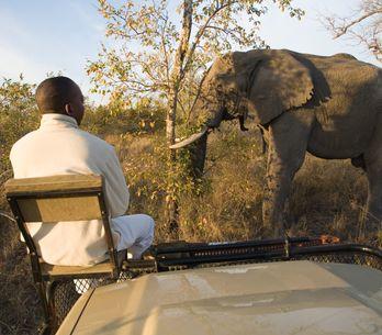 Le Botswana vend aux enchères des permis de chasse pour tuer les éléphants